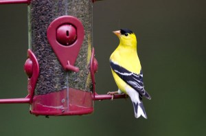 Invite Birds to Your Home Even in the Winter Months