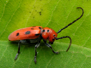Common Summer Insect Problems