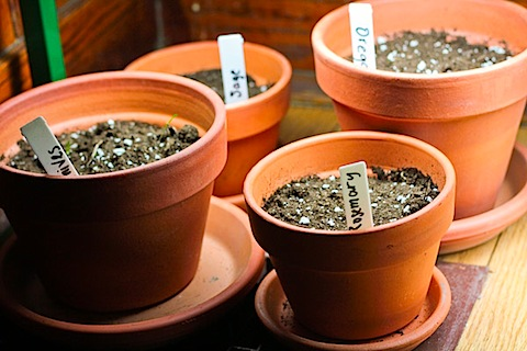 potted-herbs-4