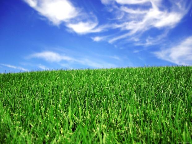 Green-Lawn-1-YI25ANCA73-1600x1200