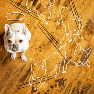 01-dog-floor